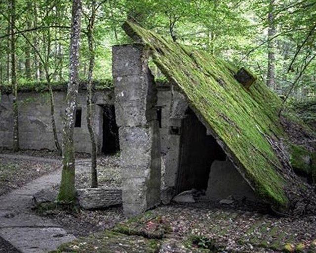 Caures-Wald – Bois des Caures